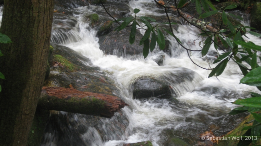 Flusslauf 1 - Gregory Ridge Trail