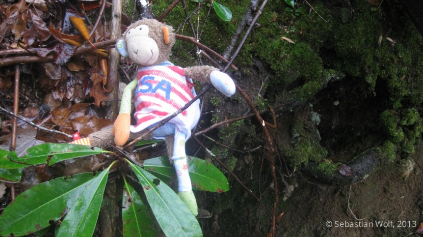 Der Affe am Klettern