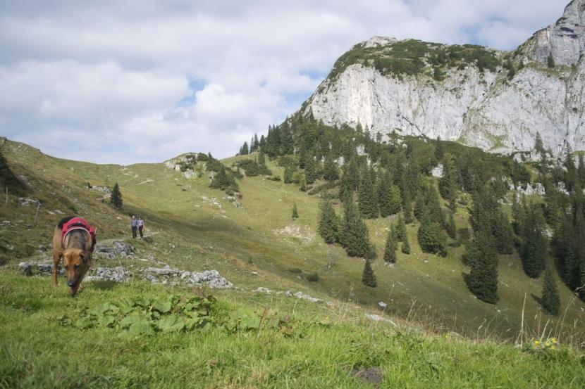 Hund in den Alpen
